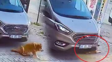 Bunun adı vicdansızlık! Aracıyla köpeği ezip kaçtı
