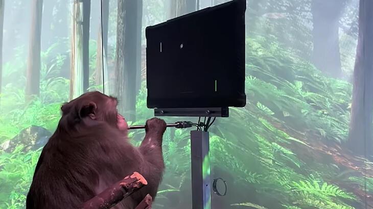 Elon Musk'ın çılgın projesi Neuralink 'ilk kez maymun' üzerinde kullanıldı!
