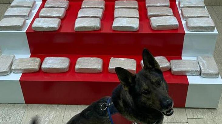 Evdeki 51 kilo eroini narkotik köpeği 'İbre' buldu