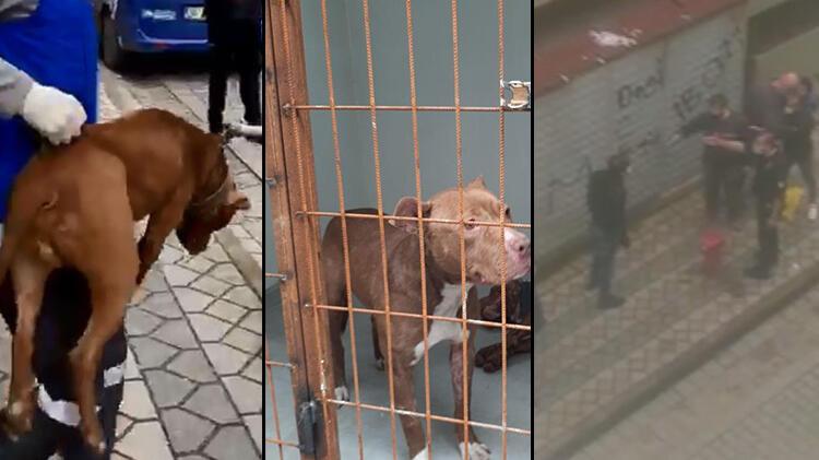 Sultangazi'de pitbull yetiştirenlere mahalleliden tepki