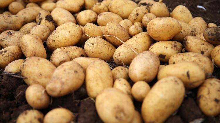 Tüketim fazlası 35 bin ton patates ihtiyaç sahiplerine dağıtıldı