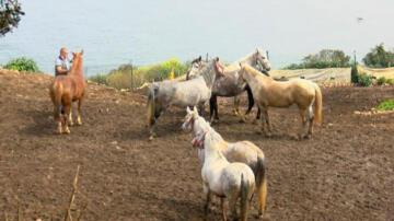 "İBB'den ""kayıp at"" iddialarına cevap: 224 at öldü"
