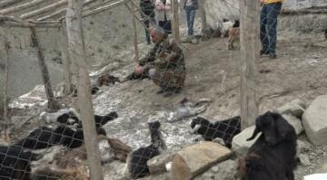 Köpekler 20 keçiyi öldürdü, 21 keçiyi de yaraladı