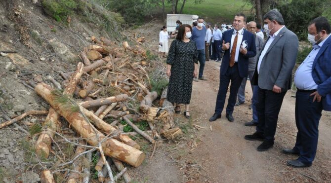 Mersin'de ağaç katliamı! 'AKP talanı ile karşı karşıyayız'
