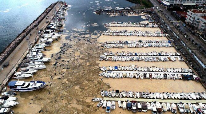 Mudanya Yat Limanı deniz salyasıyla kaplandı
