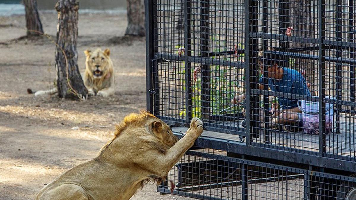 Antalya'da tepki çeken görüntü: Hayvanseverler ayaklandı